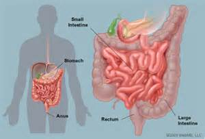 colon serotomy picture 5