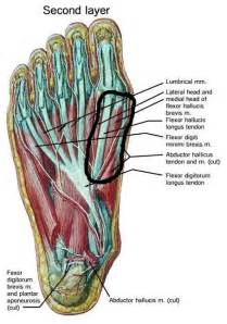 muscle pull in foot picture 2