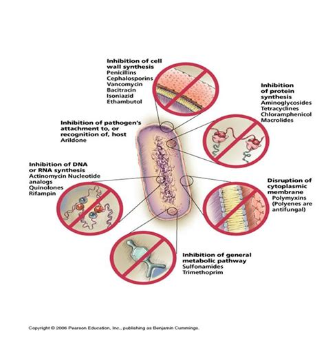 what pills to what to take for bacterial picture 4