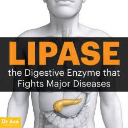 lipase and digestion picture 6