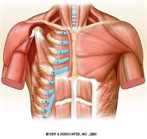 Chest muscle strain picture 3