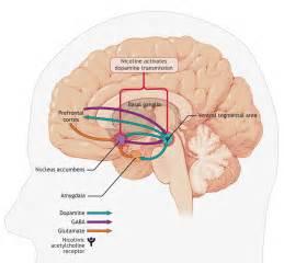 herbal dopamine picture 3