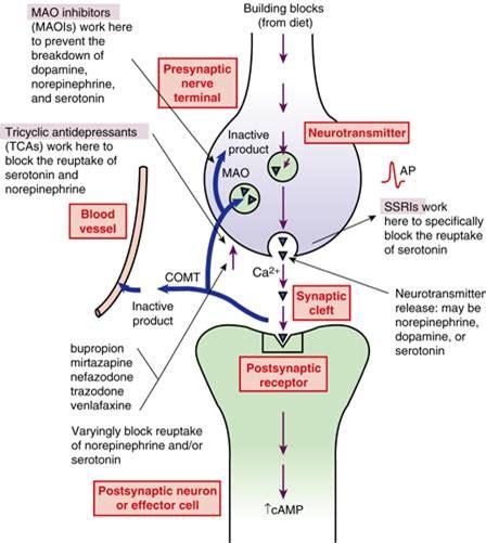 carbamazepine liver disease picture 11