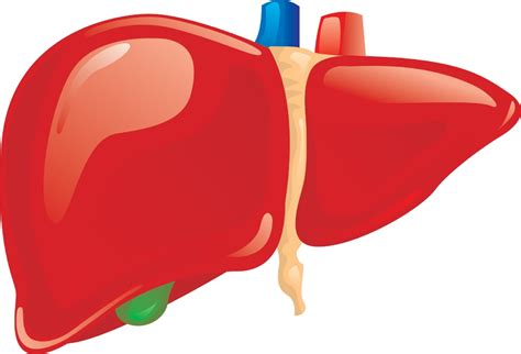 liver diseases picture 1