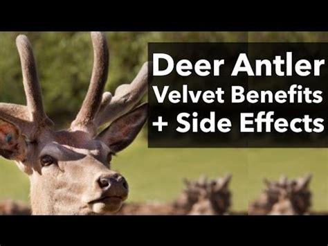 deer velvet antler good for h picture 13