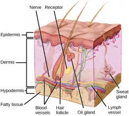 lymph blood & skin natures way picture 1