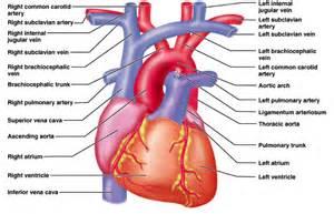 Fetal blood flow picture 9