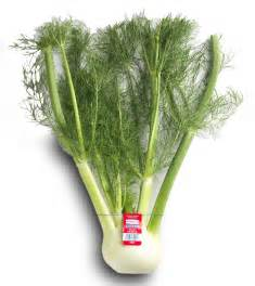 fennel picture 3
