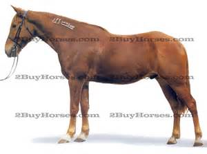 bred mares for sale in ny pa ohio picture 18