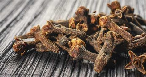 cloves and weight loss picture 2