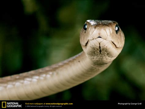 can the sex pill black mamba make you picture 1