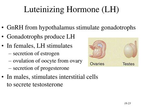 the hormone testosterone functions inside a cell by picture 8