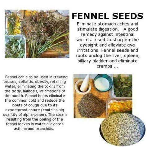 fennel tea benefits picture 14