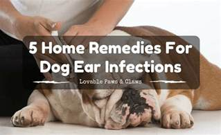 home remedy for yeast infection in dog ears picture 9