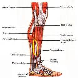 does tricor cause muscle pain in legs picture 14