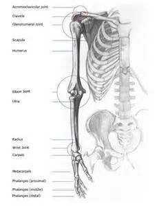 bones and joints picture 7