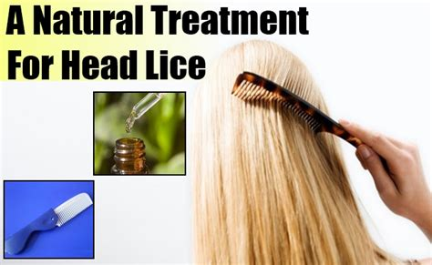 herbal treatments for lice picture 18