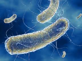 bacterial ecoli picture 7