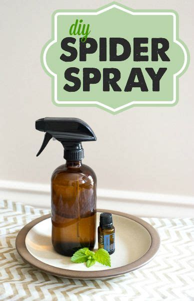 where to buy peppermint spray to get rid picture 11