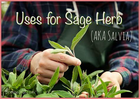 is diesel organic herbal salvia? picture 3