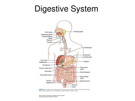 gastrointestinal illnesses household related picture 5