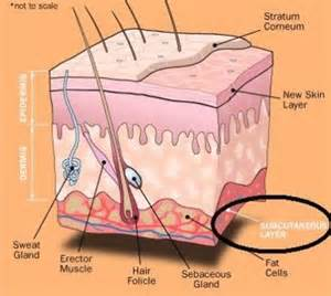 subcutaneous fat and cellulite picture 7