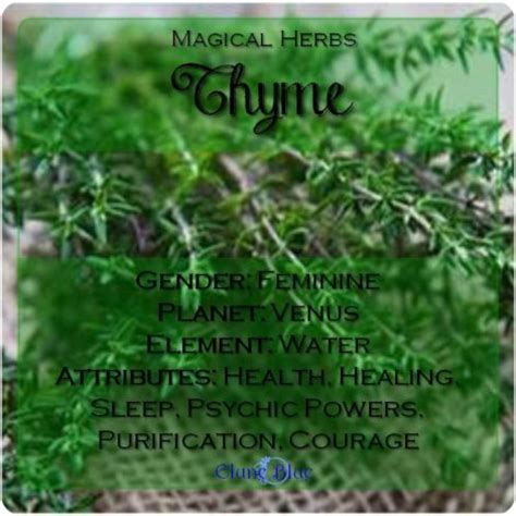 wiccan herbs and their meanings picture 19