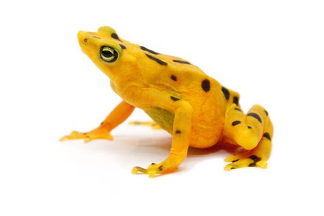 frog skin sungl es picture 13