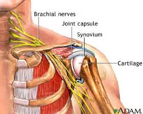 diagram of shoulder joint picture 9