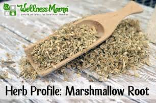 marshmallow root picture 18