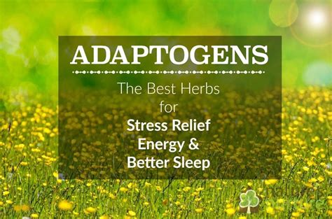 herbal energizers picture 6