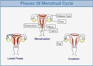 blood flow in uterus picture 15