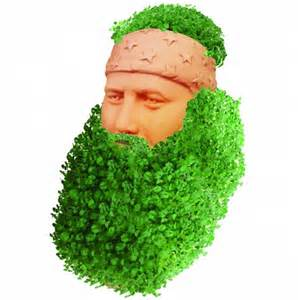 chia willie picture 2