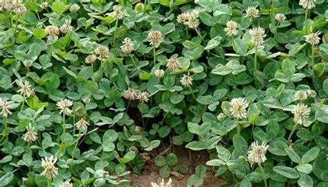 alfalfa sleep aid picture 6