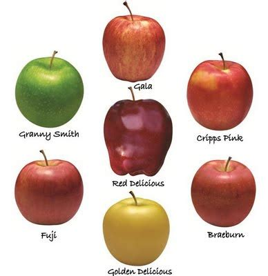 apples for weight loss picture 1