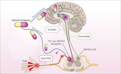 natural ways to stimulate your mu opioid receptors picture 8