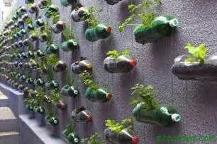 gintong halaman herbal drink tonic picture 19