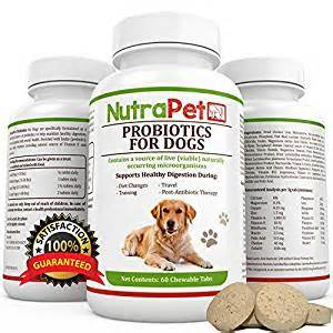 probiotics for dogs picture 13