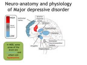neuro factors in sleep disorders picture 6