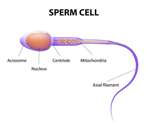 can sperm make your h white picture 11