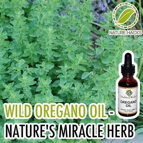 wild oregano cures hiv picture 7