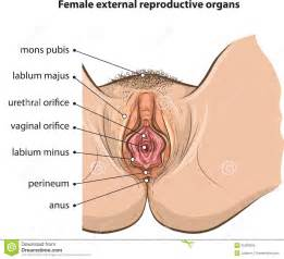 free pictures of women with both organs picture 10