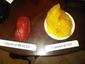 fat pounds vs muscle picture 6