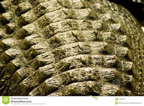 alligator skin on hands picture 6