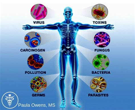 homeopathic immune system builders against syringoma picture 3