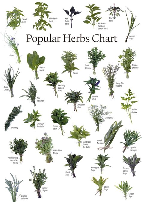 herbal diets picture 2