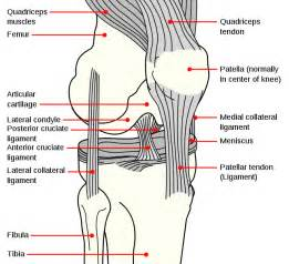 cost of knee joint replacement picture 15