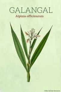 herbal gum picture 9