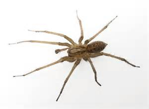 spider picture 5