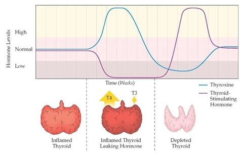 circulation and thyroid picture 6